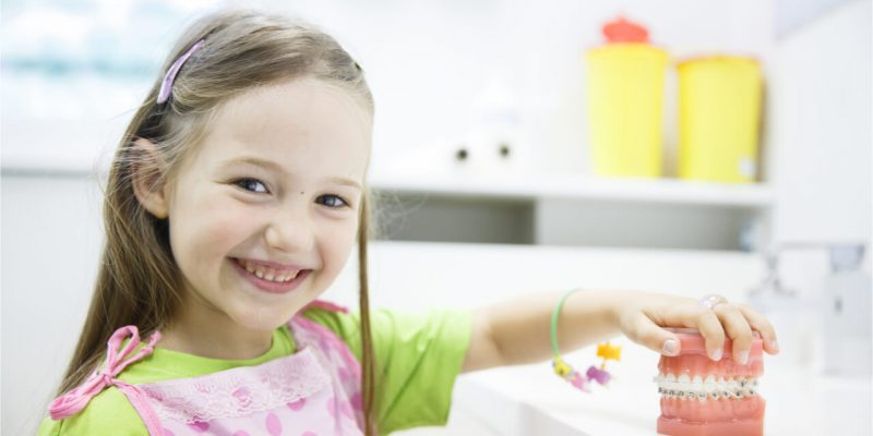 The little child holds the artificial teeth model.